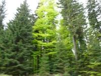 Baumblütenausfahrt 2012